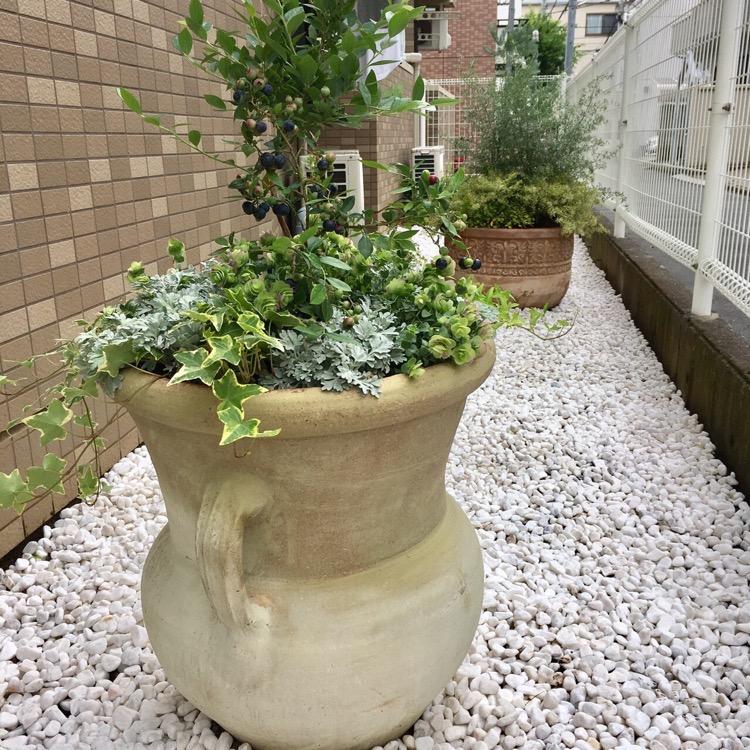 マンションの植栽