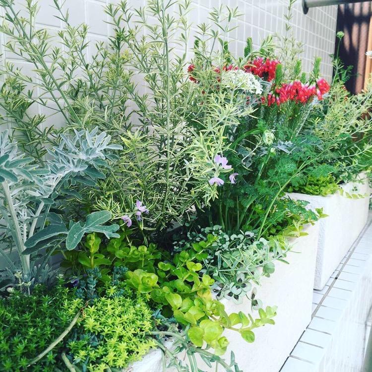 ガーデンコーディネート